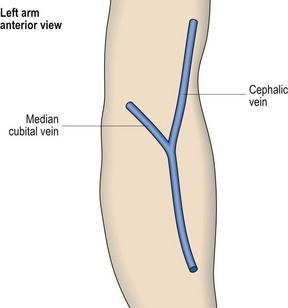 antecubital fossa