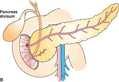 Pancreatic Anatomy and Physiology | Oncohema Key