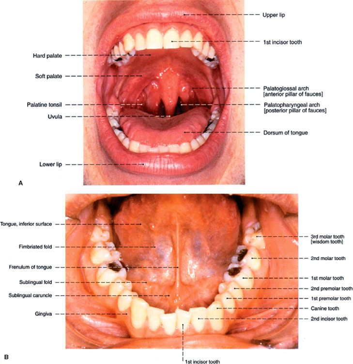 Oral Cavity Oncohema Key