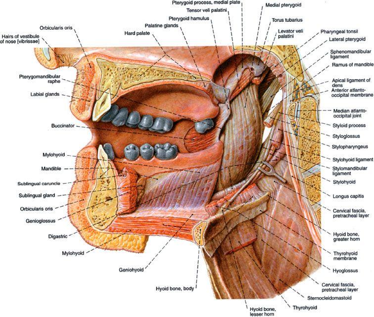 Oral Cavity Oncohema Key