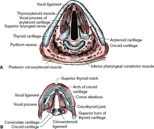 Laryngeal Cancer Oncohema Key