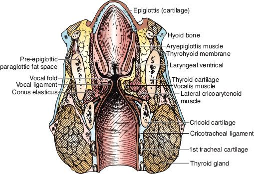 Laryngeal Cancer Oncohema Key