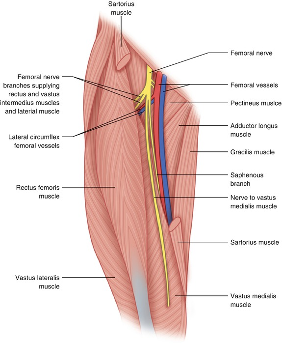 Femoral Canal Anatomy