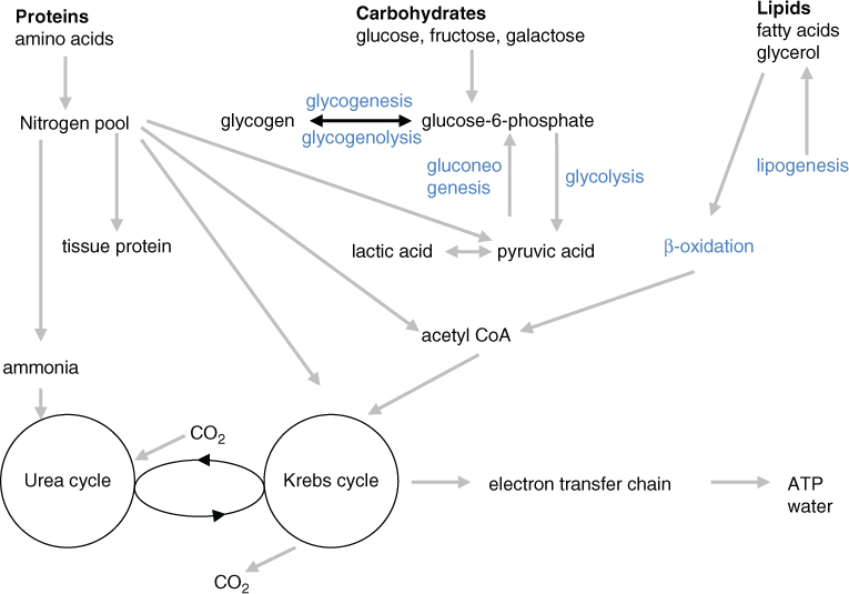 metabolic disorders involving abnormal urea synthesis abnormal zinc metabolism