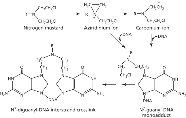 figure 3 dna alkylation by nitrogen mustard to form interstrand crosslink